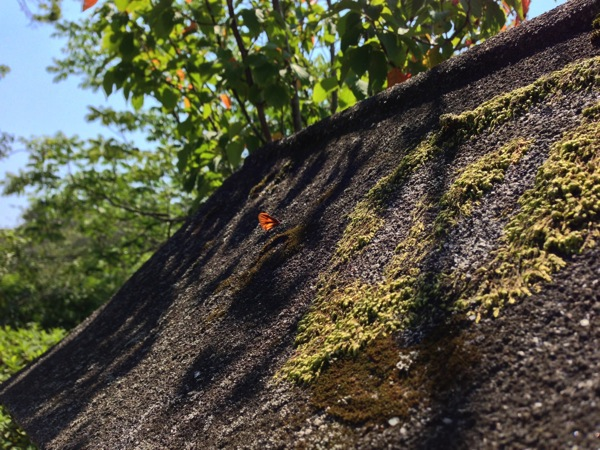 灯籠の屋根