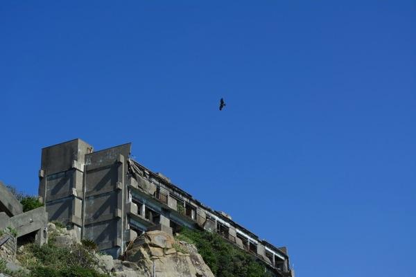 3号棟上空を飛ぶトビ