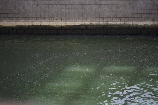 目黒川に流れる桜の花びら