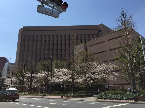 聖路加国際病院と桜