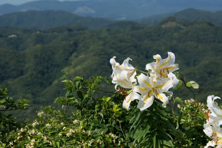 鋸山で咲く花