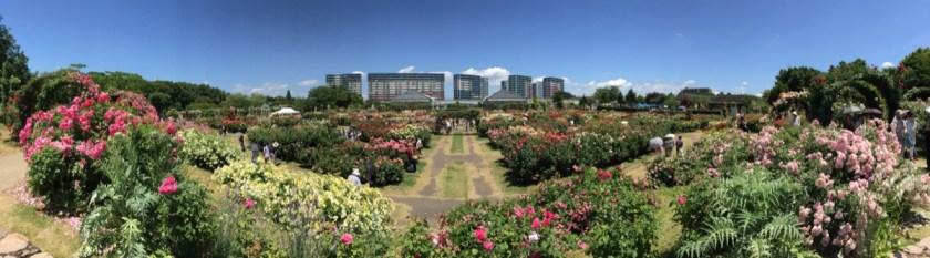 京成バラ園パノラマ写真