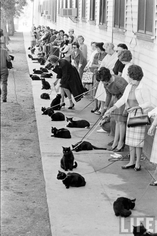 Black Cat Auditions In Hollywood, 1961 (1)
