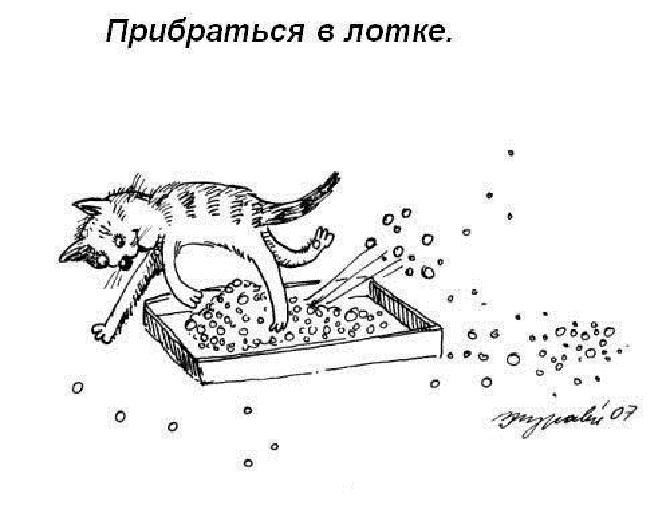 кошачьи правила этикета (1)