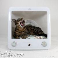 Домик для кота (20 фото)