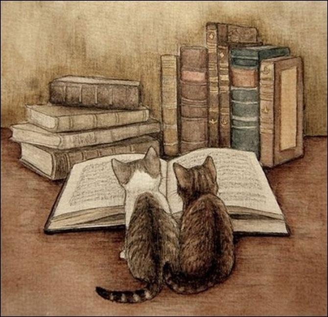 читающий кот (14)