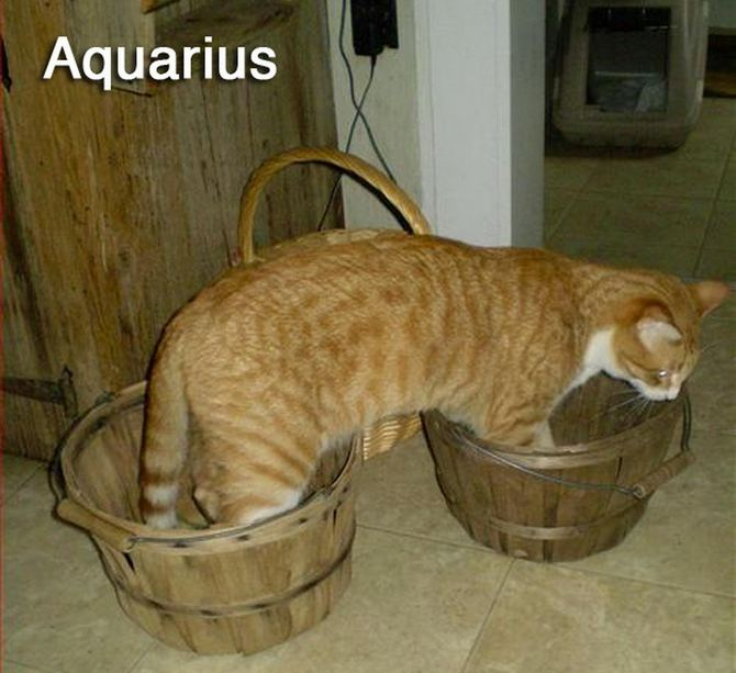 cats_of_the_zodiac_11