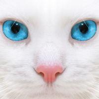 Имена для белых котов