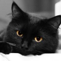 17 ноября - День защиты черных котов