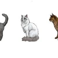 Как нарисовать карандашом кота