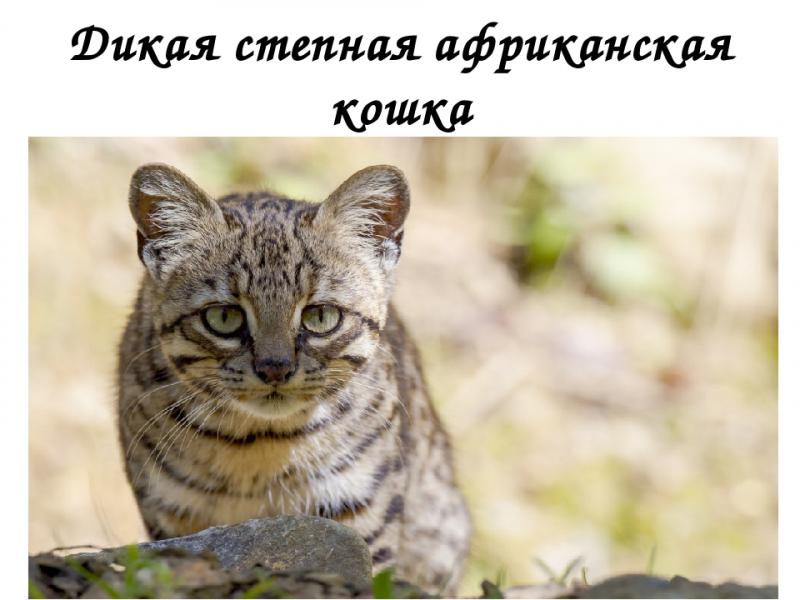 Сколько кошек на земле