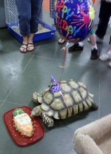turtle-birthday