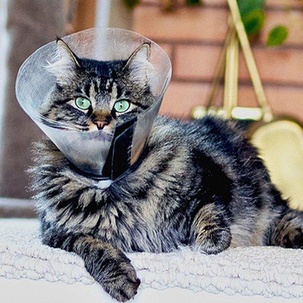 Защитный воротник для кошки средство барьерной терапии