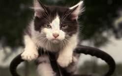 Альфа-кошки.