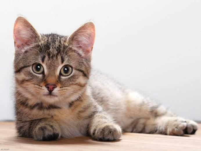 Бесплодие у кошек: причины возникновения и методы лечения.