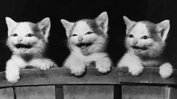 Болезни зубов у кошек: причины и лечение.