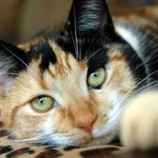 Гастрит у кошек: как определить, лечить и предупредить.