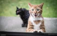 Как разговаривают кошки?