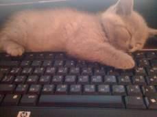 Топ 50 интересных фактов о кошках.