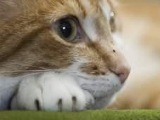 Как правильно поставить клизму маленькому котенку.