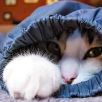 «Словарь» кошачьего языка.