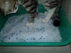 Как приучить к туалету кота.