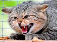 Как поставить кошке укол.