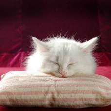 Отравление у кошек: какие опасности для животного таит в себе людской быт.
