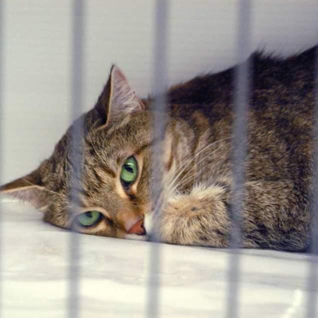 Какие прививки и от каких болезней делают кошкам.