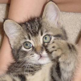 Котенок должен иметь свое личное место в доме