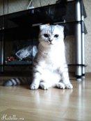Котик Тима