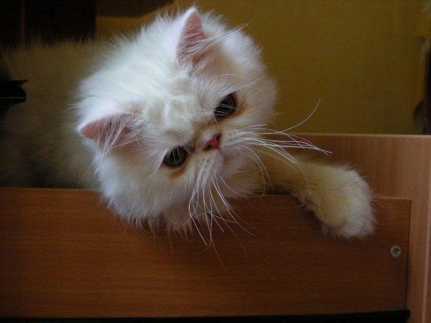 Макс умный и чуткий кот