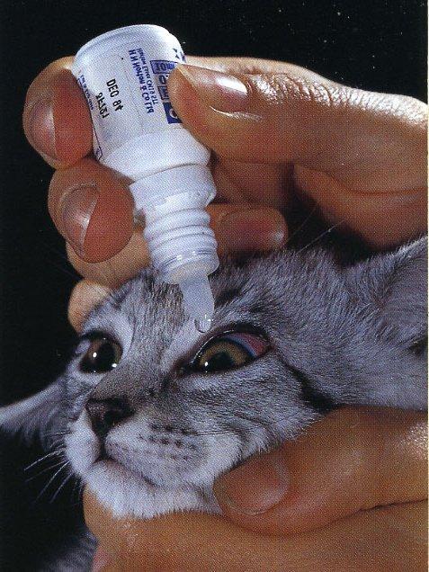 Важно следить за здоровьем кошачьих глаз