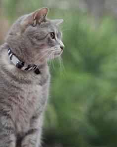Инъекции против блох должен выполнять ветеринарный врач