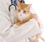 гельминтозы требуют своевременного лечения