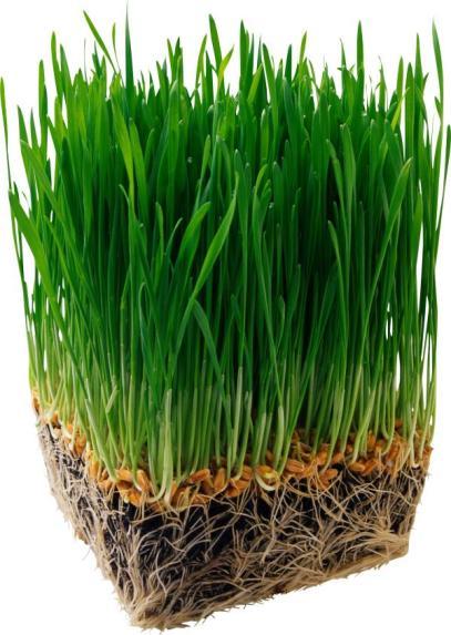 В траве содержится большое количество микроэлементов и витаминов