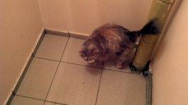 Считая себя главным кот метит территорию