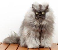 Кошка тоже хочет хорошо выглядеть