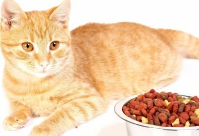 Кастрированный кот нуждается в специальном питании