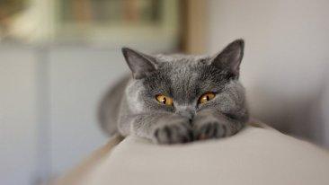 Здоровье зубов показатель здоровья кошки в целом
