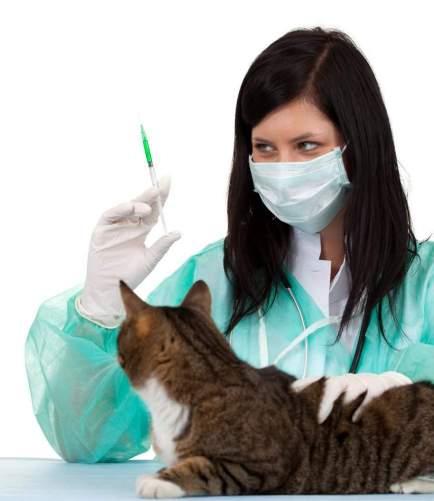Отравление у кошки опасный диагноз