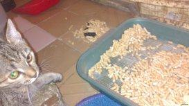 Отучайте котенка испражняться где попало
