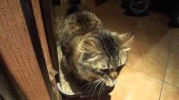 Что делать если котенок гадит где попало