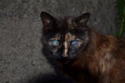 Кошка потерявшая зрение, нуждается в поддержке