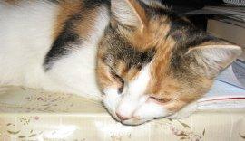 После стерилизации кошке требуется покой, внимание и любовь с Вашей стороны