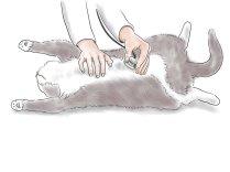 При первых признаках, указывающих на патологию печени,обратитесь к ветеринарному специалисту