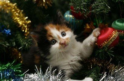 Подарок должен быть не только красивым, но и нужным