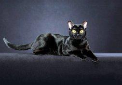 Здоровья шерсти напрямую зависит от питания кошки