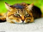 Кошка становится вялой и равнодушной ко всему происходящему