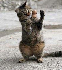 Соорудите для кошки игрушку из сподручных средств